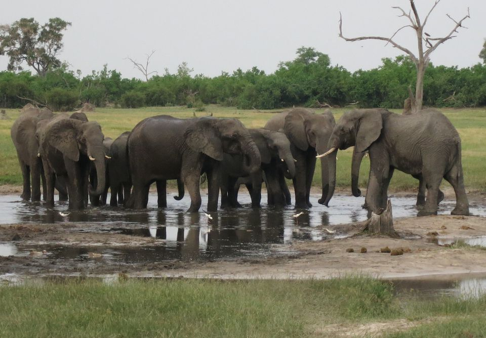 Where to See Elephants in Africa