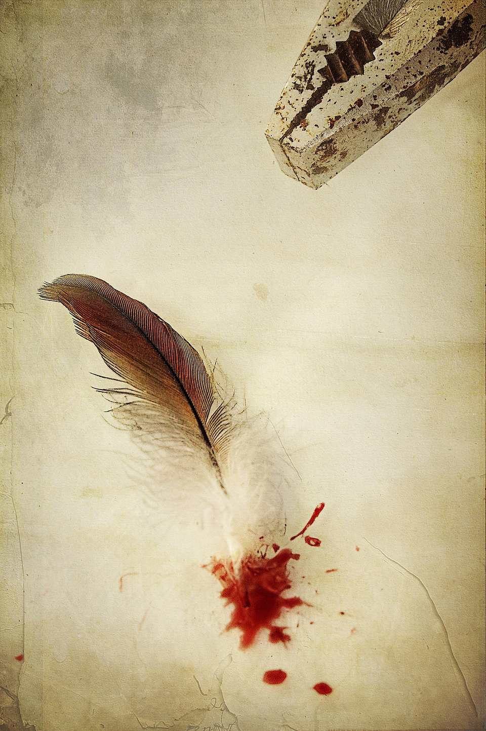 feather with blood