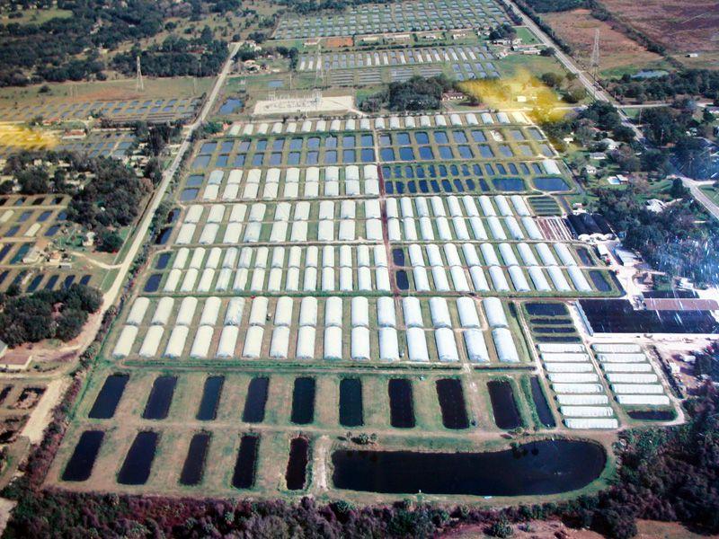 aquarium fish farm in Florida