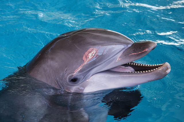 Dolphin at Baltimore's National Aquarium