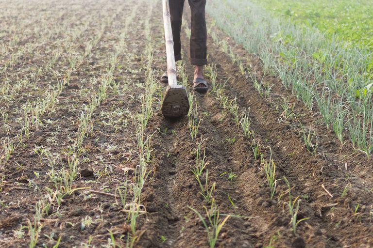 Organic Agriculture Farming in Bangladesh