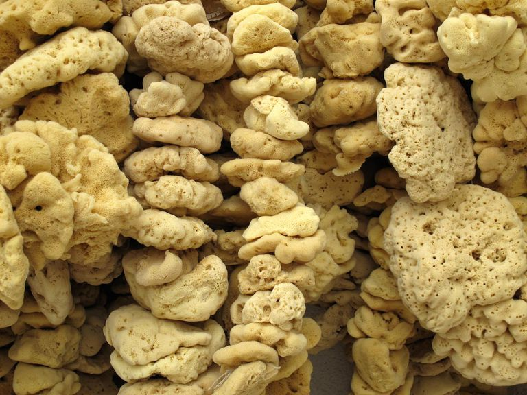 Natural Sea Sponges In A Shop In the Island Of Pag