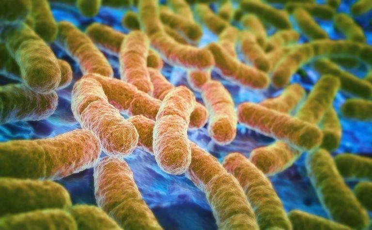 E. coli gut baceria.