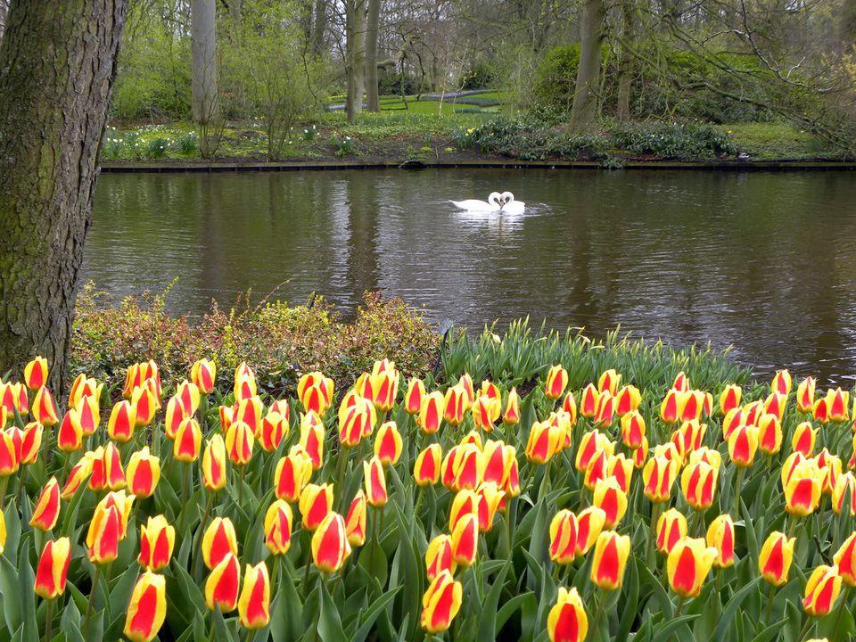 Keukenhof netherlands dutch flower gardens - Jardines de holanda ...