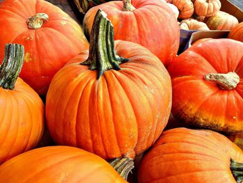 How To Cook A Pumpkin For Pies And Other Recipes