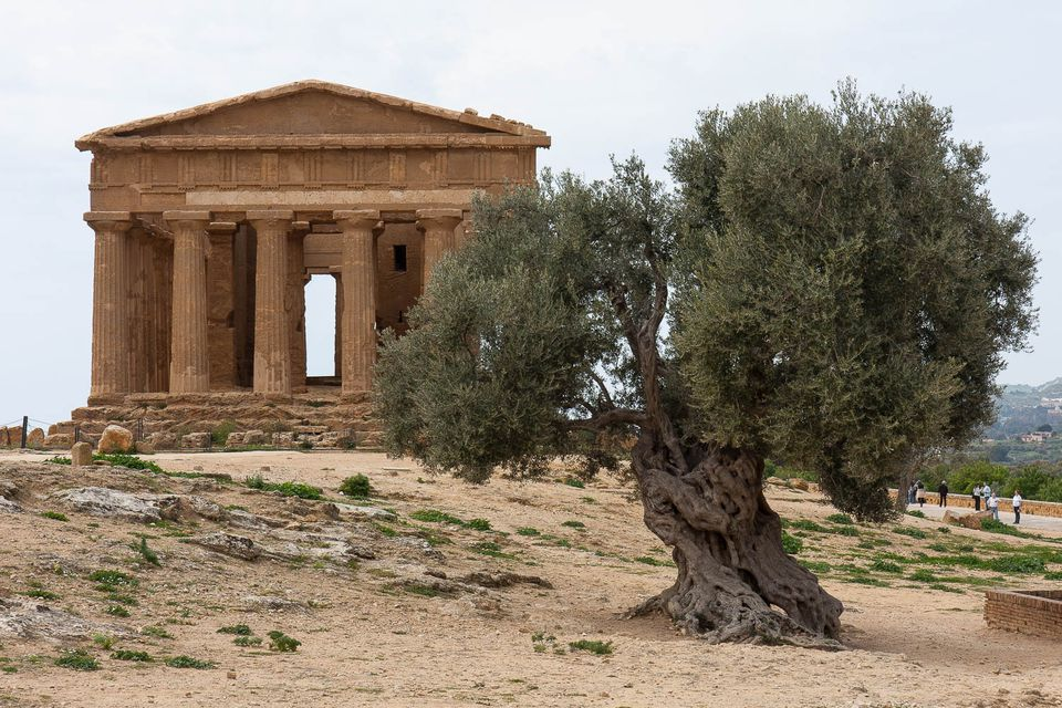 agrigento greek temple photo