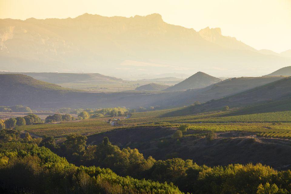 Vineyards in La Rioja, Alava, Rioja and Basque Country, Spain, Europe.
