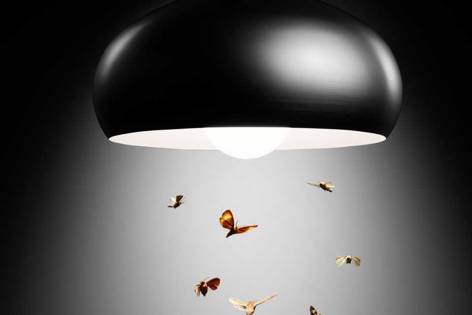 Moths flying in lamp light