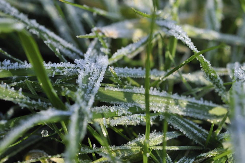 Frost grass in the morning