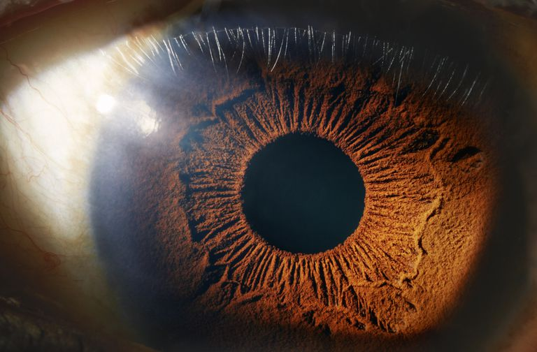 The human eye functions like a camera.