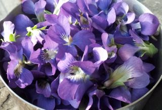 Violets in a bowl