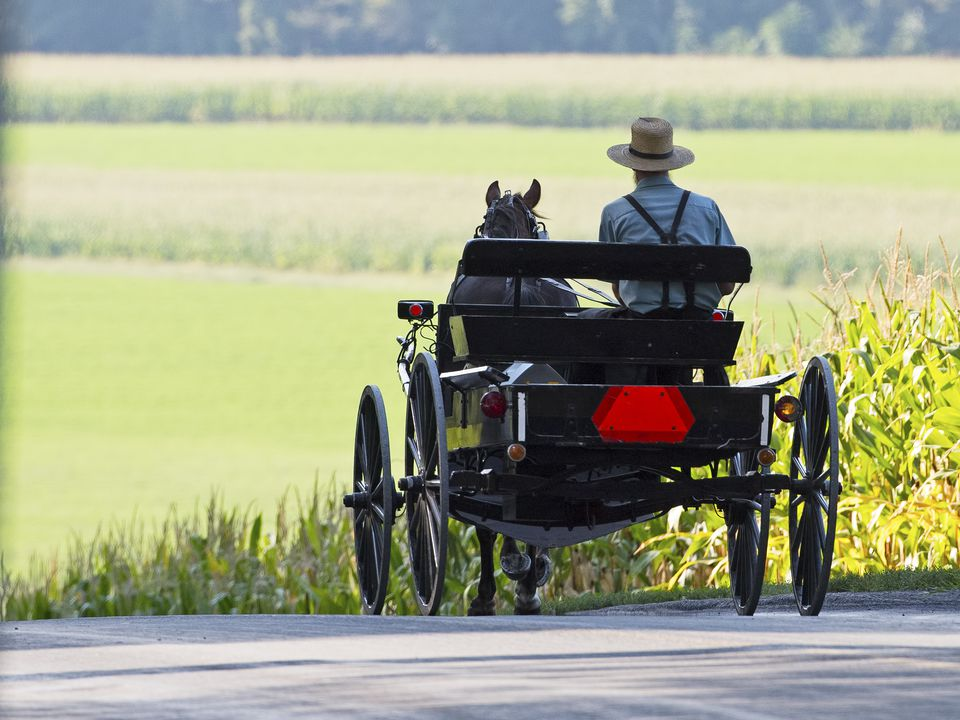 Amish man in a cart and buggy