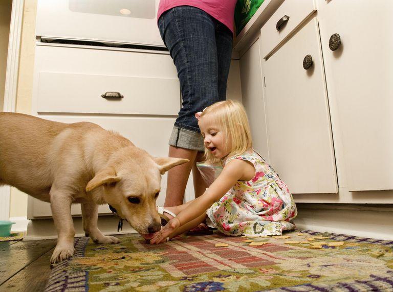 Toddler feeding dog on kitchen floor