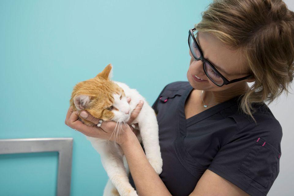 Photo of Veterinarian Examining Cat