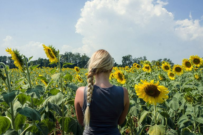 Rear View Of Woman Standing On Sunflower Field During Sunny Day