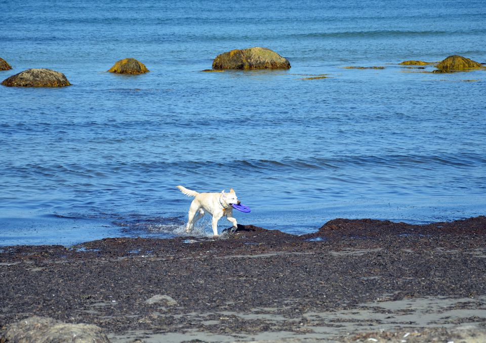 New England Dog Friendly Vacations