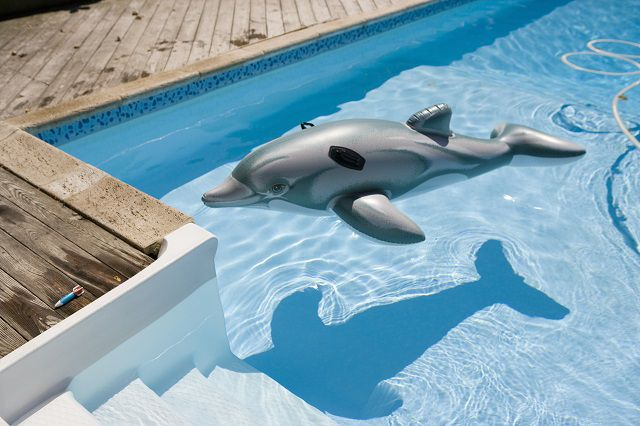 Inflatable dolphon in pool
