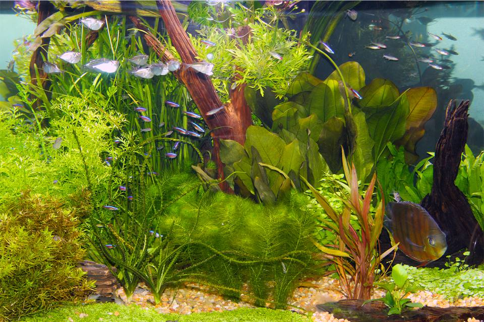 LED lighting for aquarium plants