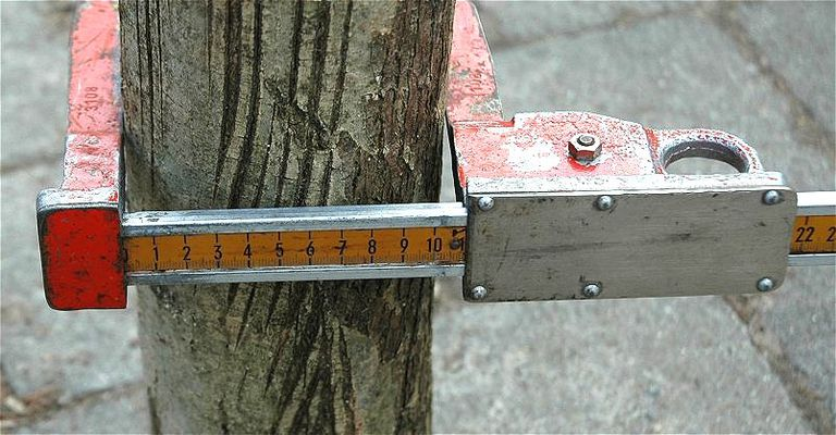 tree caliper
