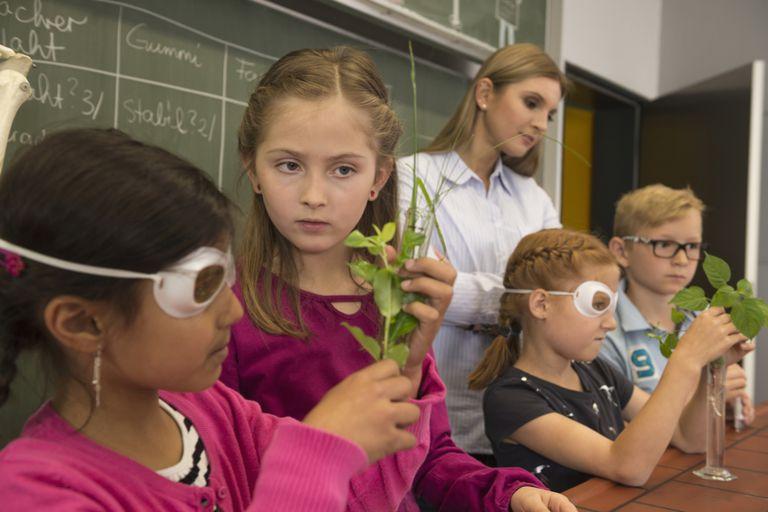 Students: Plant Experiment