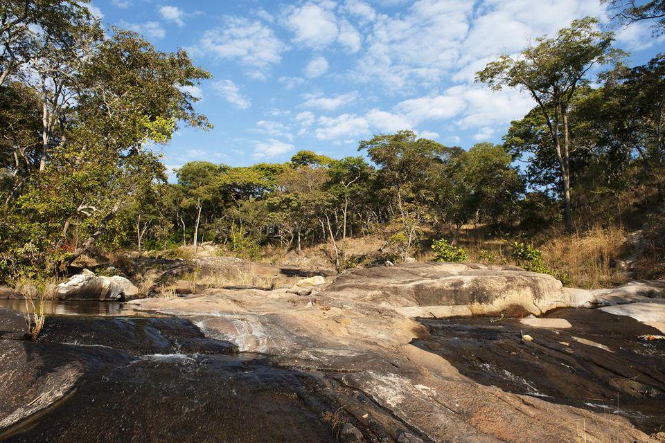 Dzalanyama Forest Reserve. Malawi, East Africa, Africa