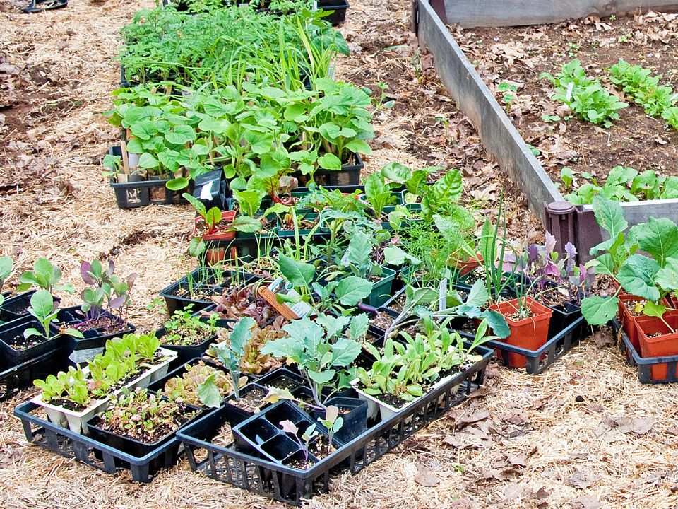 How to Harden Off Plants Most plants need a period of adjustment before being left outdoors and there are several ways to do it.
