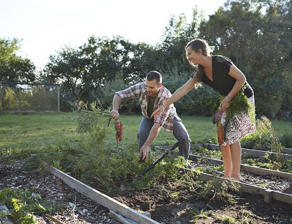 How To Design Your Ideal Vegetable Garden