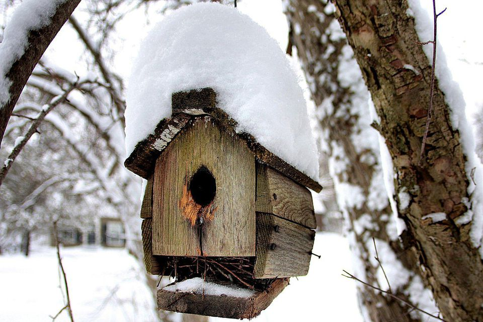 Damaged Winter Bird House