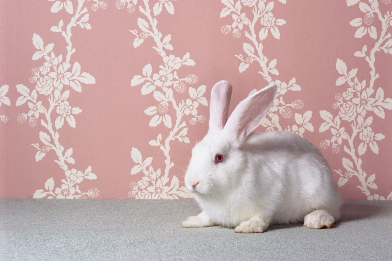 homemade rabbit toys toys for pet rabbits