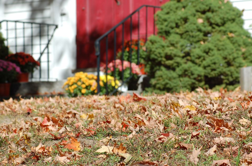 Image of leaves needing to be raked on lawn.