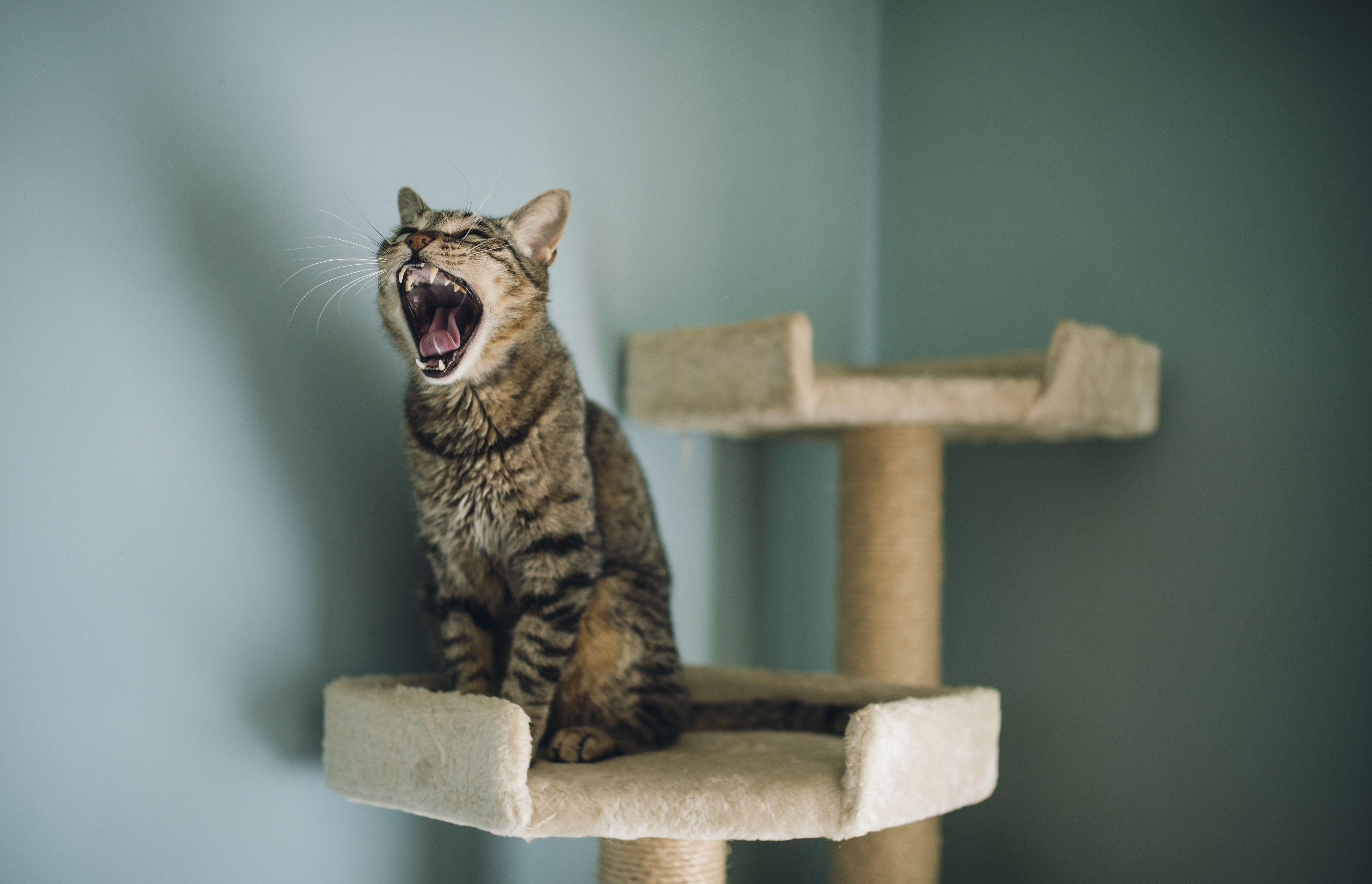 grey cat en p xl ca mondou trixie light with tree hammock nita