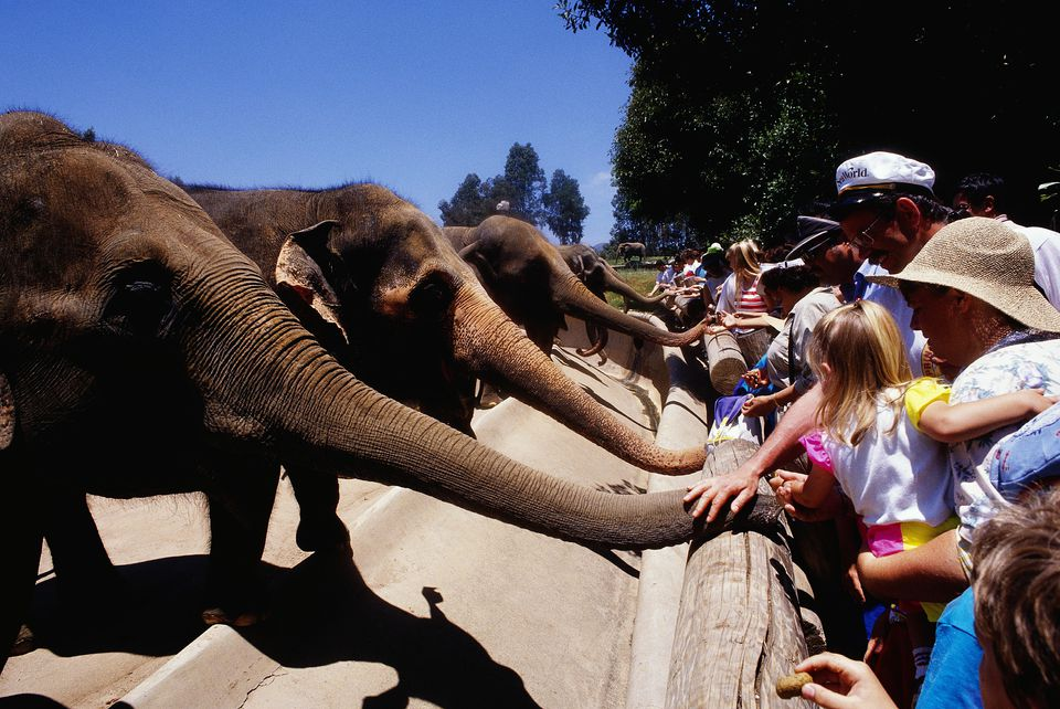 People Petting Elephants at the San Diego Zoo