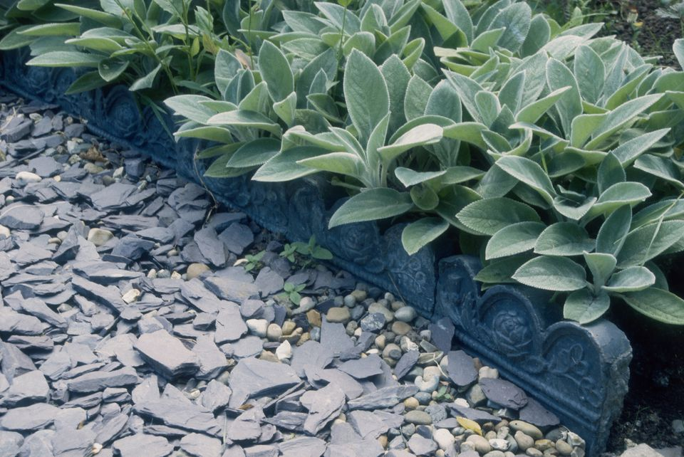 Path made of slate and pebbles with decorative tiles, and Lamb's ears (Stachys byzantina), June