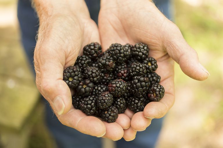 Man holding blackberries