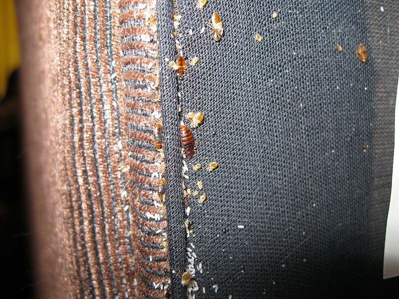 Dos and Donts of Bed Bug Control