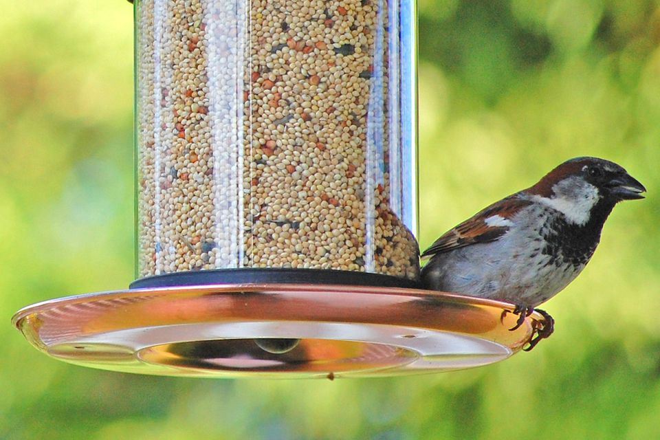 feeders clear with make pole feeder oil your for garden bird decor idea best rubbed bronze acrylic tall own natural