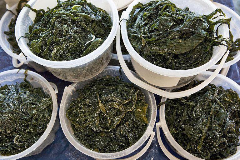 Fresh wakame seaweed in fish market_Choshi_Chiba Japan