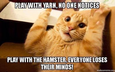 Funny Memes For Kids Animals : 50 internet memes that have won our hearts