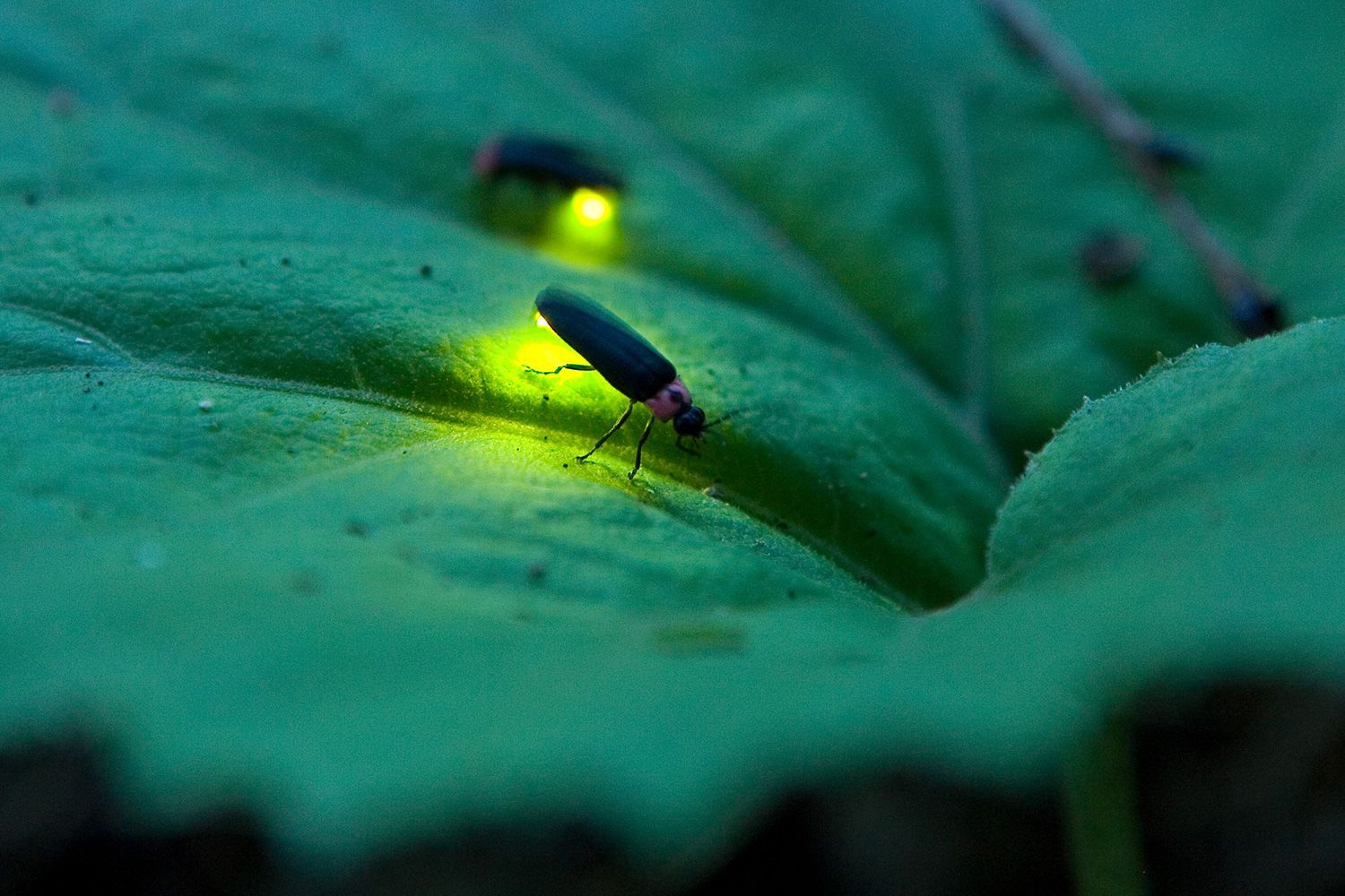 10 fascinating facts about fireflies and lightning bugs