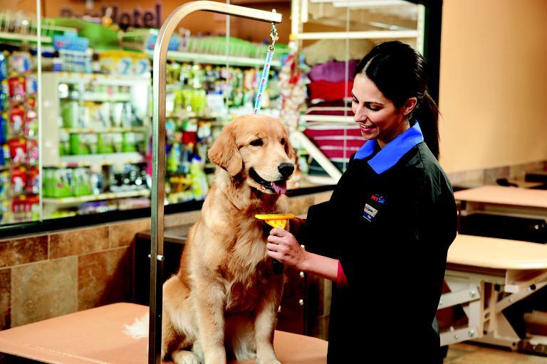 petsmart code of ethics The sony group code of conduct anchors our ethics and compliance program our code sets out our  to its personnel to ask ethics questions or raise.