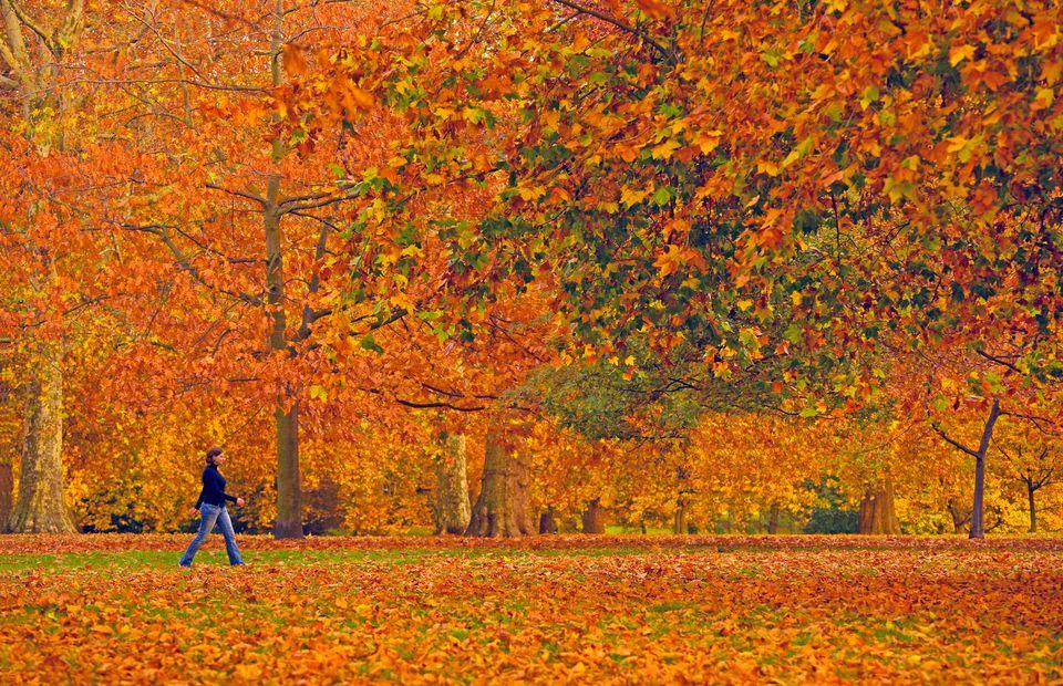 Hyde Park Autumn