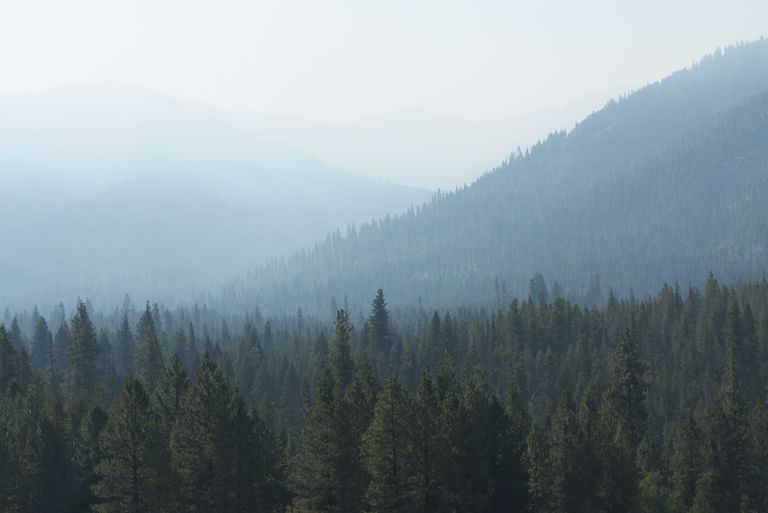 Misty view of tree covered mountains