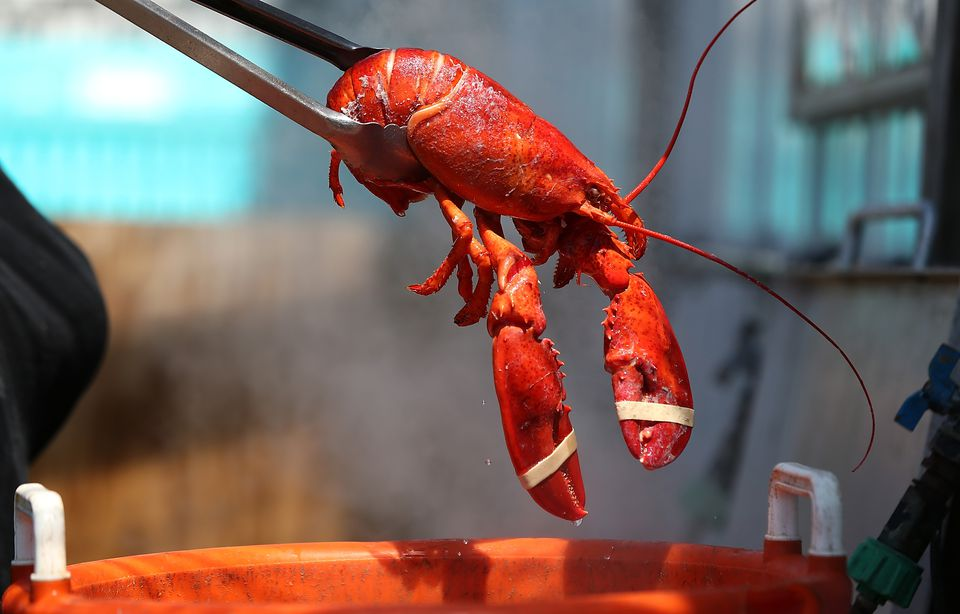Mild Winter In Northeast Drives Lobster Prices To Record Lows