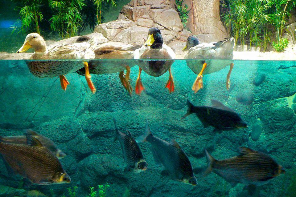 The Shanghai aquarium.