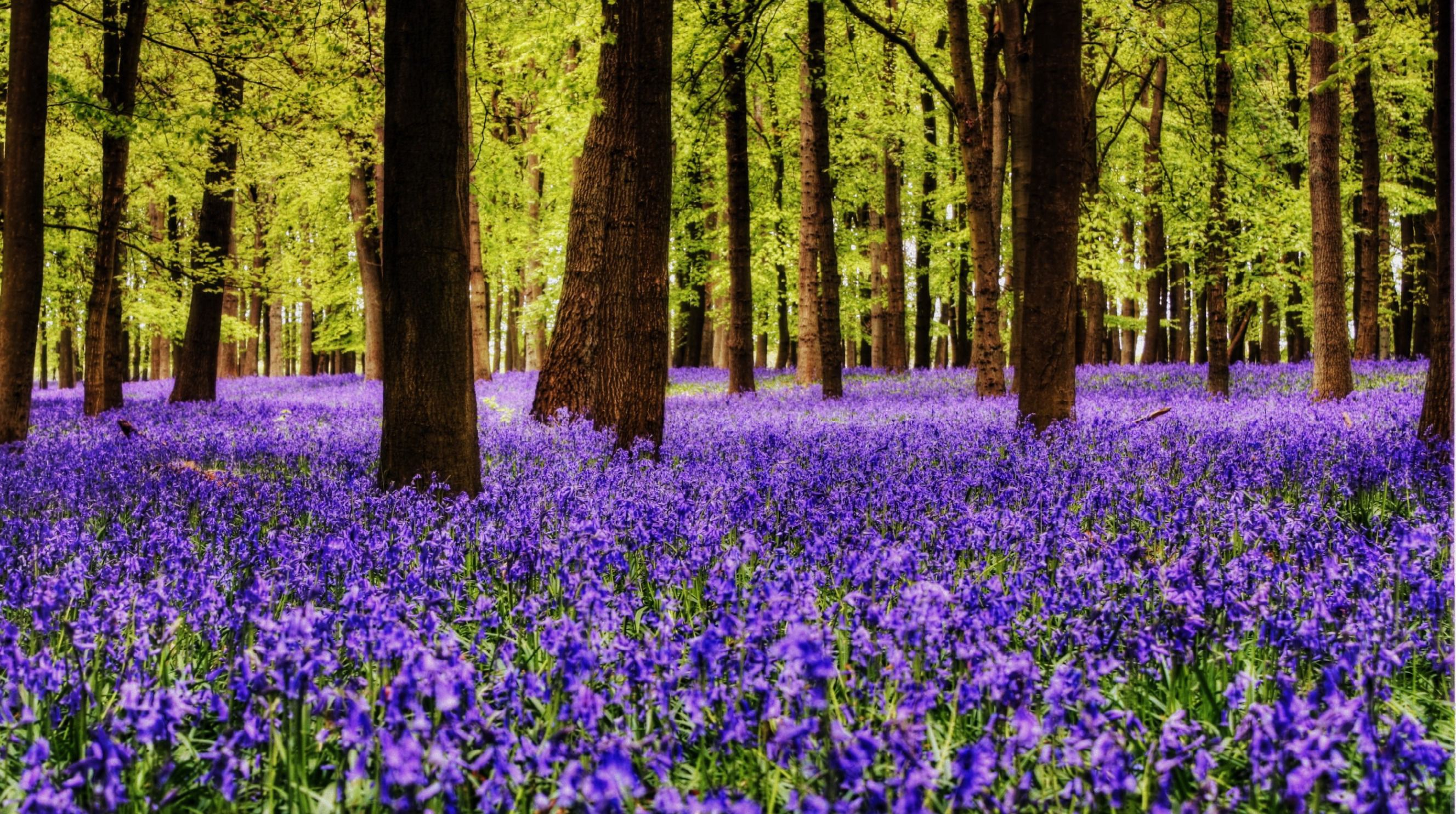 10 Best English Bluebell Woods To Visit In May