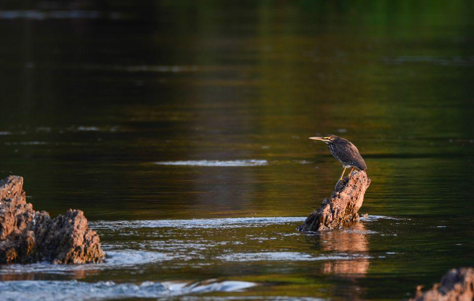 Exploring Namibia's Unique Caprivi Strip Heron