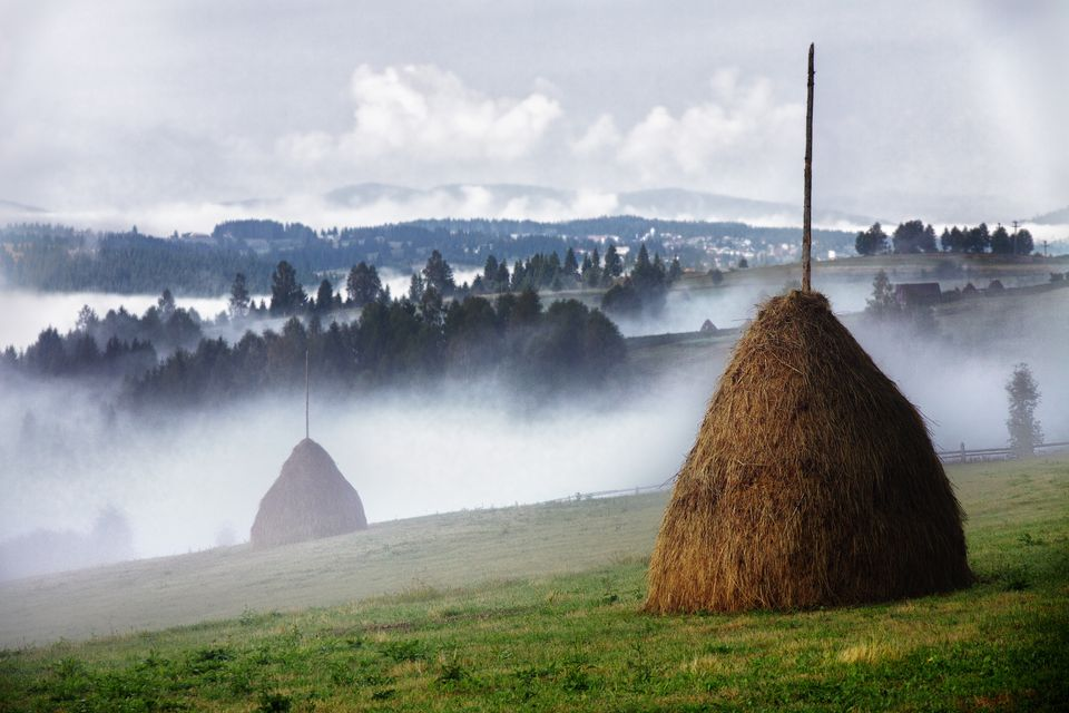 Hay and mist