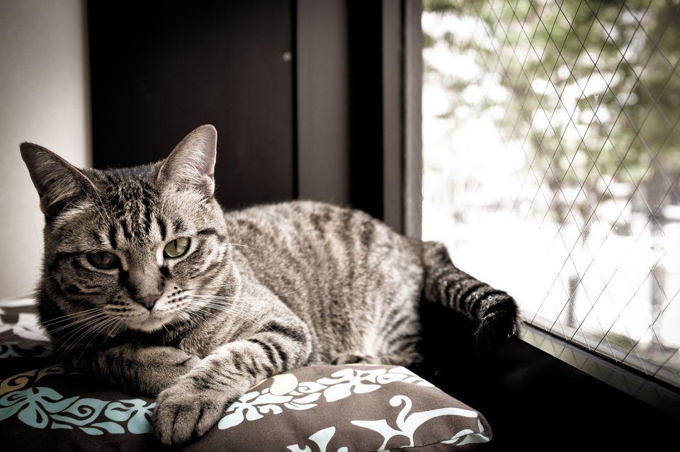 Window Seat Cat