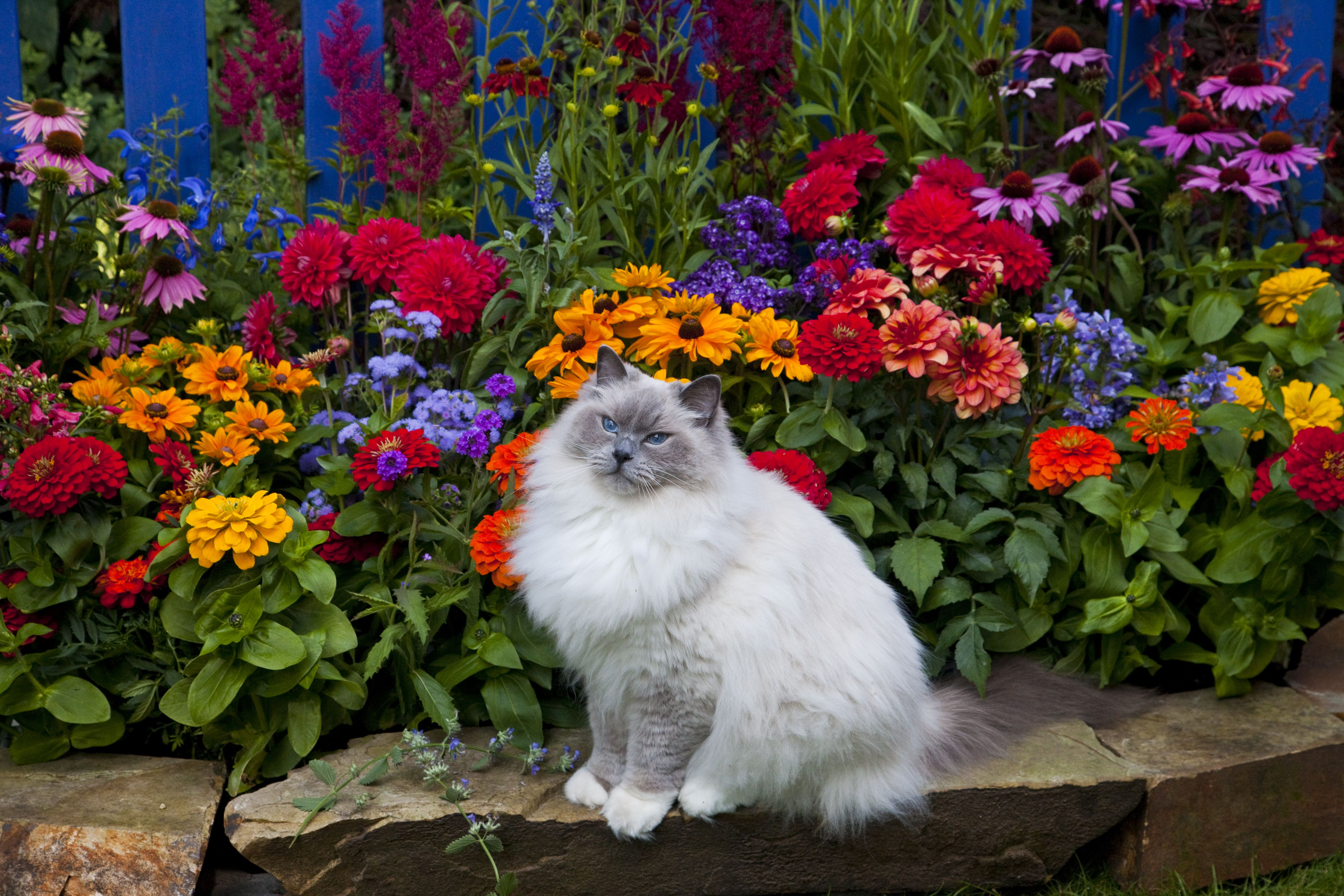 Keep Cats Out of Flower Beds