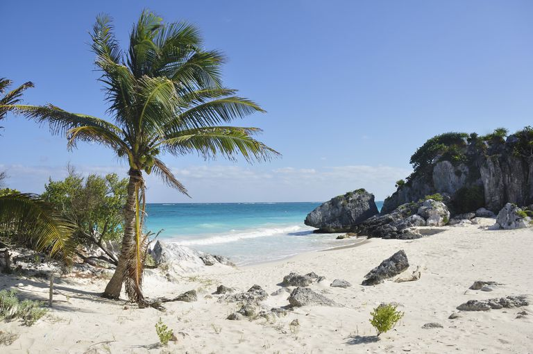 Beach with Palm Tree on the Mayan Riviera, Quintana Roo, Yucatan Peninsula, Mexico